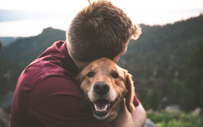 4 Uses for CBD for Your Pets